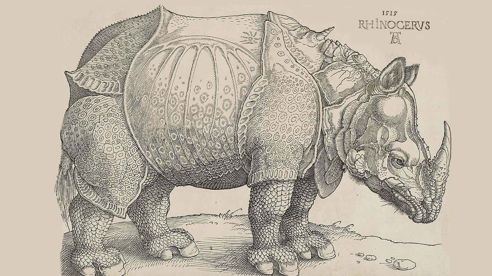 rhinoceros.world - Albrecht Dürer
